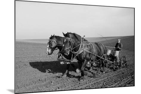 Two Large Work Horses Pull the Farmer and His Corn Seed Drill in Iowa, 1940s--Mounted Photo