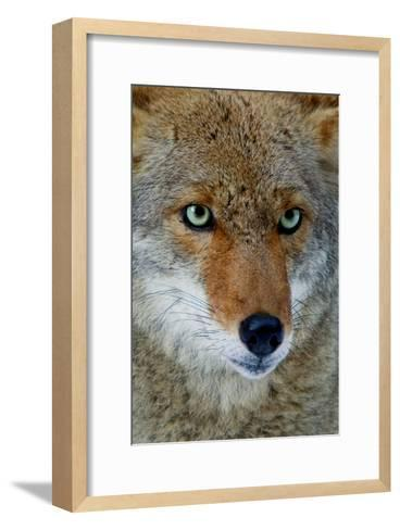 Fox Face-Howard Ruby-Framed Art Print