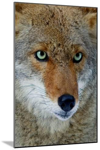 Fox Face-Howard Ruby-Mounted Photographic Print