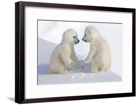 Dueling Polar Bear Cubs-Howard Ruby-Framed Art Print
