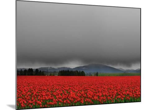Tulip Fields-Howard Ruby-Mounted Photographic Print