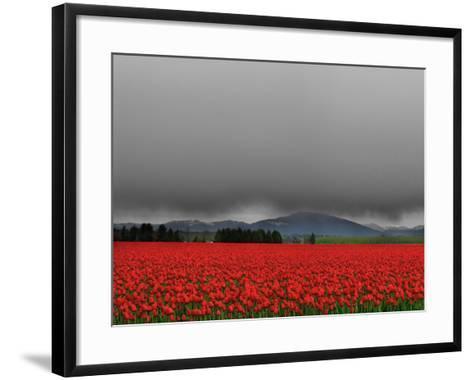 Tulip Fields-Howard Ruby-Framed Art Print