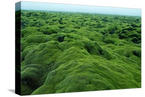 Field of Moss-Howard Ruby-Stretched Canvas Print