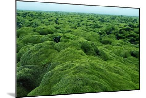 Field of Moss-Howard Ruby-Mounted Photographic Print