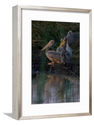 Night Swim-Howard Ruby-Framed Art Print