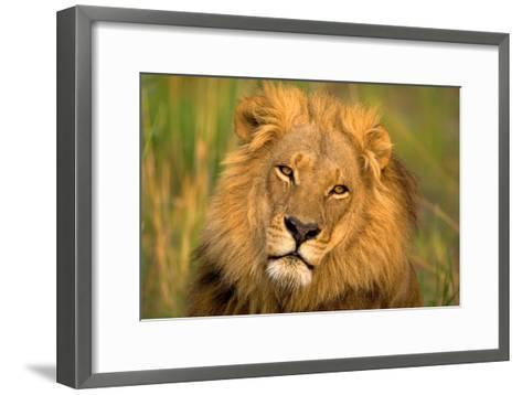 Lion King-Howard Ruby-Framed Art Print