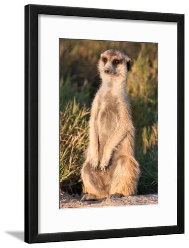 Meerkat Gaze-Howard Ruby-Framed Art Print