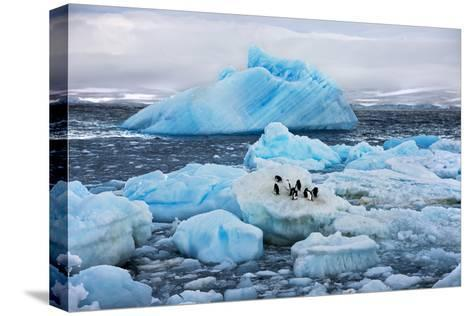 Penguins and Ice-Howard Ruby-Stretched Canvas Print