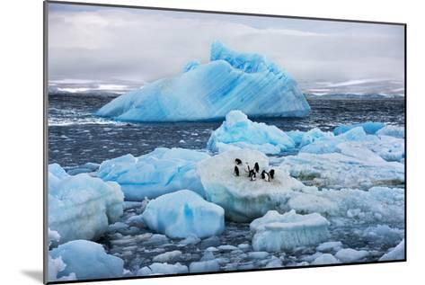 Penguins and Ice-Howard Ruby-Mounted Photographic Print