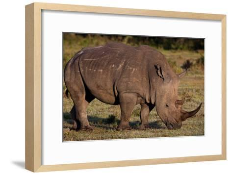 White Rhino-Howard Ruby-Framed Art Print