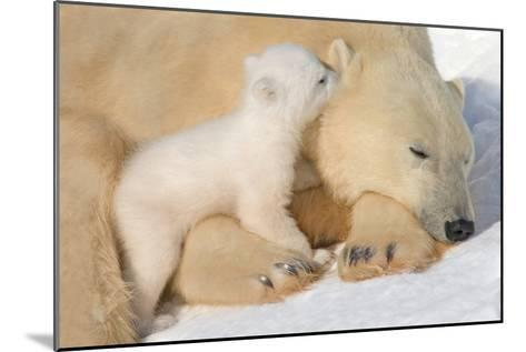 Cub Whispering to Mother-Howard Ruby-Mounted Photographic Print