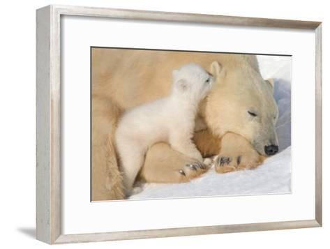 Cub Whispering to Mother-Howard Ruby-Framed Art Print