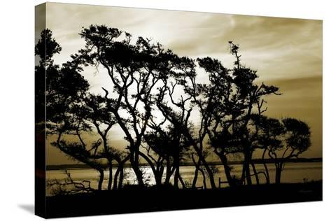 Blissful Shore II-Alan Hausenflock-Stretched Canvas Print