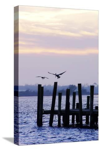 Pelican and Friend-Alan Hausenflock-Stretched Canvas Print