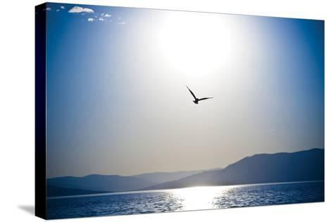 Take Flight-Erin Berzel-Stretched Canvas Print