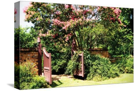 Crepe Myrtle I-Alan Hausenflock-Stretched Canvas Print