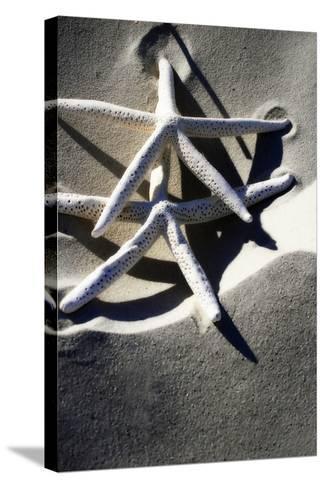 Sea Stars I-Alan Hausenflock-Stretched Canvas Print