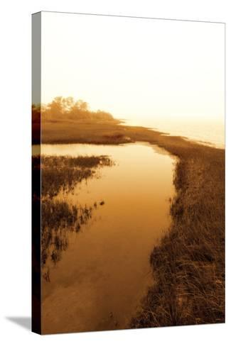 Harker's Island Marsh II-Alan Hausenflock-Stretched Canvas Print