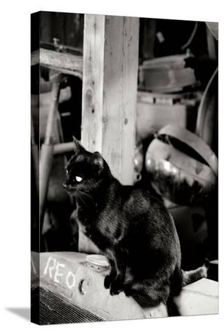 Farm Cat-Erin Berzel-Stretched Canvas Print