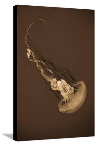 Sea Nettle III-Erin Berzel-Stretched Canvas Print