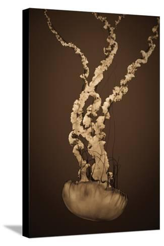 Sea Nettle IV-Erin Berzel-Stretched Canvas Print