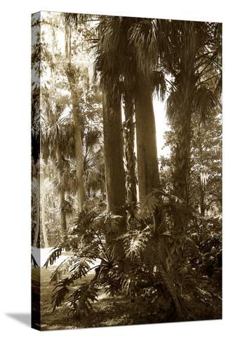 Tropical Garden 2-Alan Hausenflock-Stretched Canvas Print