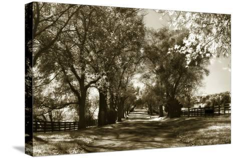 Autumn Foothills 6-Alan Hausenflock-Stretched Canvas Print
