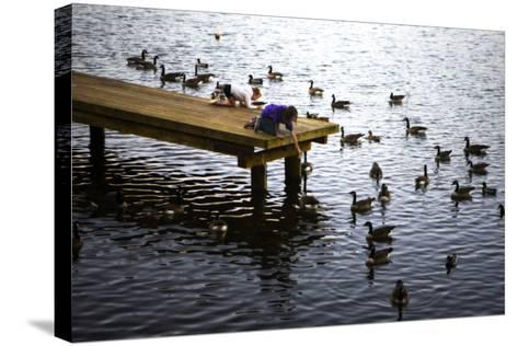 Feeding the Geese IV-Alan Hausenflock-Stretched Canvas Print