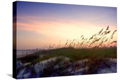 Rosey Sunset II-Alan Hausenflock-Stretched Canvas Print