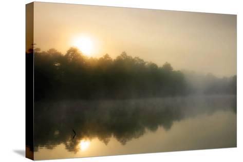 Fog on the Mattaponi 3-Alan Hausenflock-Stretched Canvas Print