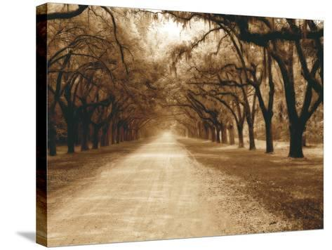 Savannah Oaks II-Alan Hausenflock-Stretched Canvas Print