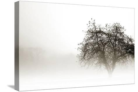 In the Mist I-Alan Hausenflock-Stretched Canvas Print