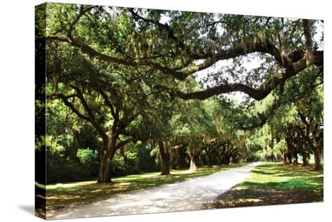 Charleston Oaks 4-Alan Hausenflock-Stretched Canvas Print