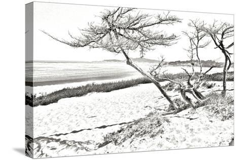 Carmel Beach IV-Alan Hausenflock-Stretched Canvas Print