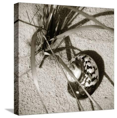 Seashells II-Alan Hausenflock-Stretched Canvas Print