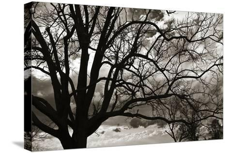 Approaching Storm II-Alan Hausenflock-Stretched Canvas Print