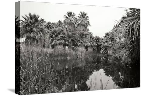 Ancient Palms I-Rita Crane-Stretched Canvas Print