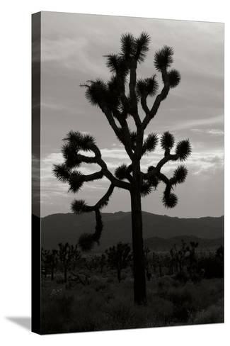 Yucca Brevifolia I-Erin Berzel-Stretched Canvas Print