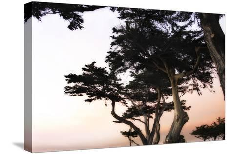 Cypress Silhouette 3-Alan Hausenflock-Stretched Canvas Print