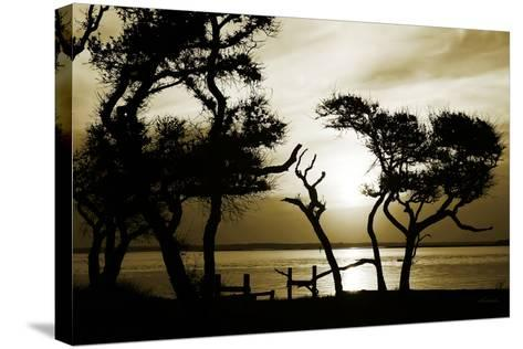Blissful Shore I-Alan Hausenflock-Stretched Canvas Print