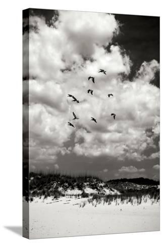 Pelicans over Dunes V BW-Alan Hausenflock-Stretched Canvas Print