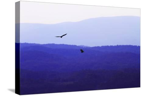Blue Ridge III-Alan Hausenflock-Stretched Canvas Print