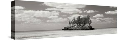 Gaulding Cay Conch BW Panel-Larry Malvin-Stretched Canvas Print