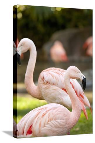 Flamingos II-Karyn Millet-Stretched Canvas Print