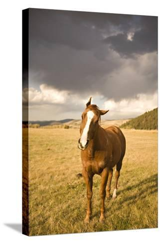 Out in the Pasture I-Karyn Millet-Stretched Canvas Print