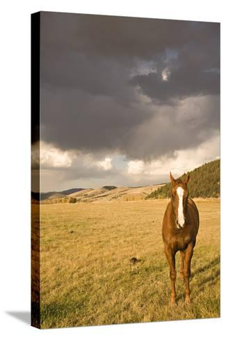 Out in the Pasture II-Karyn Millet-Stretched Canvas Print
