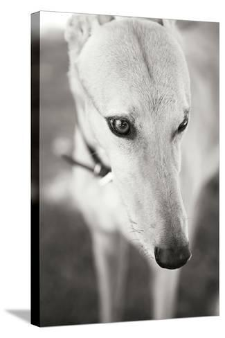Greyhound Black and White-Karyn Millet-Stretched Canvas Print