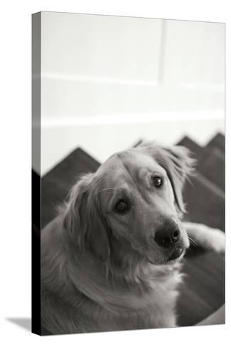 Goldie I Black and White-Karyn Millet-Stretched Canvas Print