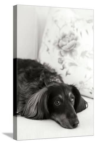 Dachshund Black and White-Karyn Millet-Stretched Canvas Print