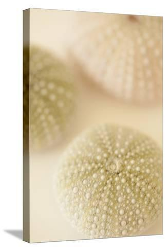 Ocean Treasures III-Karyn Millet-Stretched Canvas Print